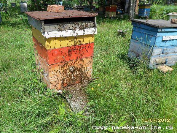 Макушка лета и пчеловодного сезона..