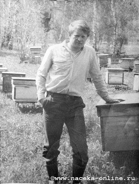 Не дня без пчёл...
