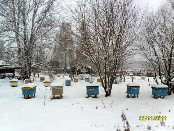 Поставил пчёл в зимовник.Ура!!!