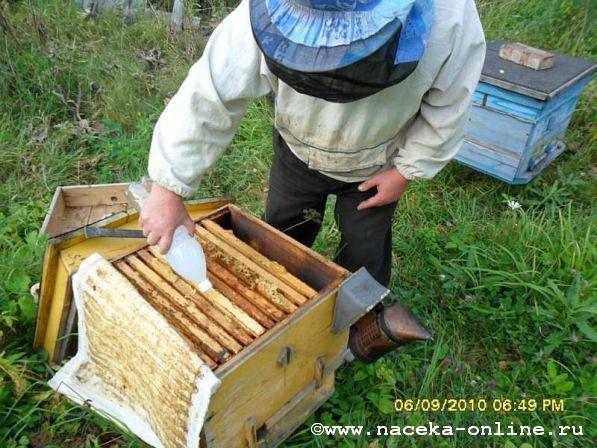 Клещеустойчивая пчела существует!