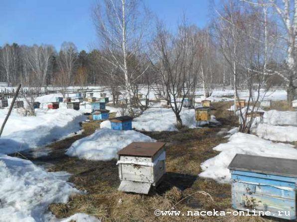 С праздником, пчеловоды !!!